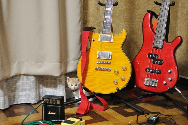 cats and guitar
